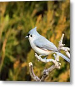 Tufted Titmouse On A Branch Metal Print