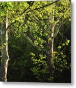 Branches Of Lovely Light Metal Print