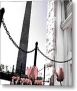 Tuilps And The Washington Monument  Metal Print
