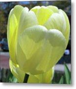 Tulip 0761 Metal Print