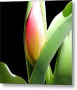 Tulip 1 Metal Print