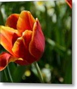 Tulip 11 Metal Print