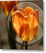 Tulip 1b Metal Print