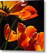 Tulip 38 Metal Print