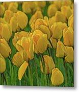 Tulip. Metal Print