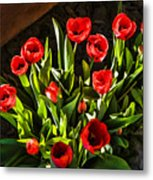 Tulip Beauties Metal Print