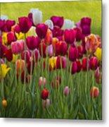 Tulip Bed  0117op Metal Print