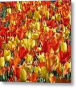 Tulip Delight 1 Metal Print