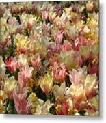 Tulip Delight 3 Metal Print