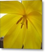Tulip Delight Metal Print