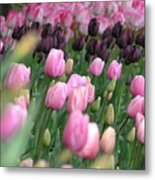 Tulip Dreams Metal Print