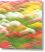 Tulip Field Abstract - Holland Michigan Metal Print