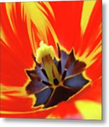 Tulip Flower Floral Art Print Red Yellow Tulips Baslee Troutman Metal Print