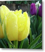 Tulip Flowers Artwork Tulips Art Prints 10 Floral Art Gardens Baslee Troutman Metal Print