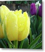 Tulip Flowers Artwork Tulips Art Prints 10 Floral Art Gardens Baslee Troutman Metal Print
