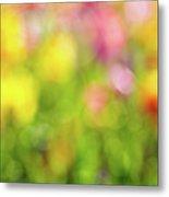 Tulip Flowers Field Blurred Defocused Background Metal Print