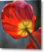 Tulip From Below Metal Print