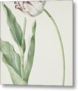Tulip Grand Roy De France Metal Print