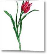 Tulip Illustration Metal Print