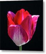Tulip In Profile. Metal Print