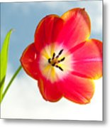 Tulip In The Sky Metal Print