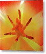 Tulip Inside Flower Orange Tulips Art Prints Baslee Metal Print