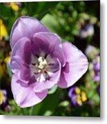 Tulip Lavender Metal Print
