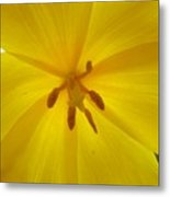 Tulip Light Metal Print