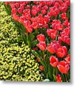 Tulip Line Metal Print