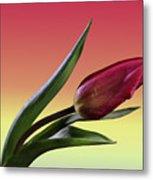 Tulip Love Metal Print