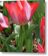 Tulip Magic Metal Print