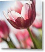 Pink Tulip Closeup Metal Print