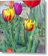 Tulip Mixture Metal Print