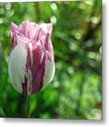 Tulip Morn Metal Print