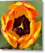 Tulip Metal Print