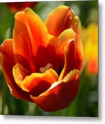 Tulip On Fire Metal Print