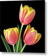 Tulip Passion Metal Print