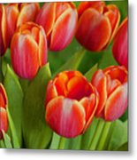 Tulip Patch Metal Print