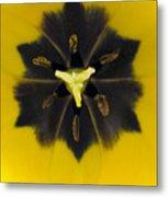 Tulip Pixie Metal Print