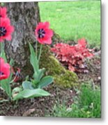 Tulip Poppie Metal Print