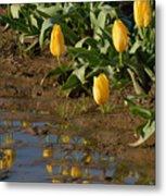 Tulip Reflections Metal Print