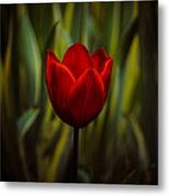 Tulip Metal Print by Rod Sterling