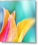 Tulip Tips Metal Print