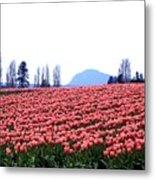 Tulip Town 3 Metal Print
