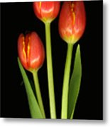 Tulip Trio Revisted Metal Print