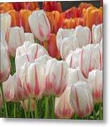 Tulip Wave Metal Print
