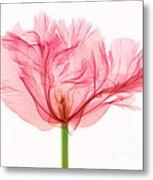 Tulip, X-ray Metal Print