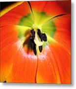Tulips - An Inside Look Metal Print