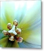 Tulips #12 Metal Print