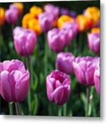 Tulips 14 Metal Print